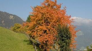 Herbstgenuss… einfach die Seele baumeln lassen