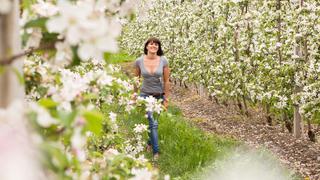 Zwischen Apfelblüte und Sonnenschein