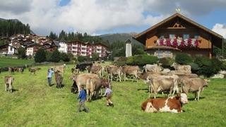 Alpine pastures in the Dolomites