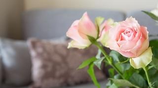 Rose & Romanticismo