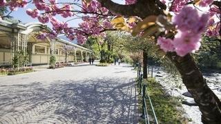 La primavera si risveglia a Merano