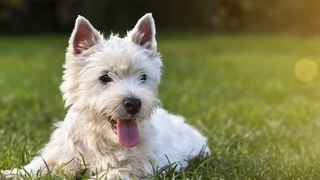 Urlaub mit Hund im naturbelassenem Passeiertal