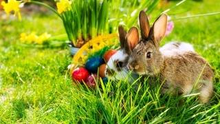 Settimana Pasqua con Primavera- e MeranoCard