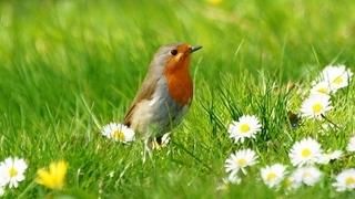 Offerta primavera