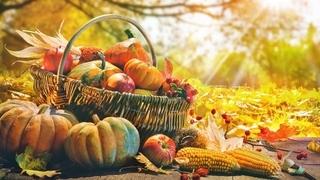 Offerta speciale in autunno