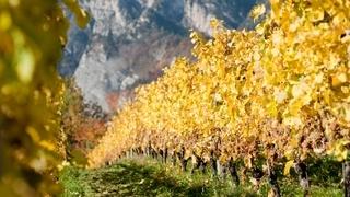 Herbstwandertage
