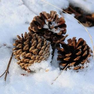 Weihnachten in den Dolomiten
