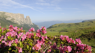 Profumo dei prati delle Alpi
