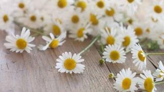 Alpen Blühen