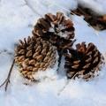Natale nel paradiso delle Dolomiti
