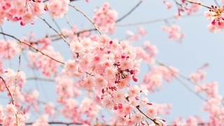 Festività di primavera