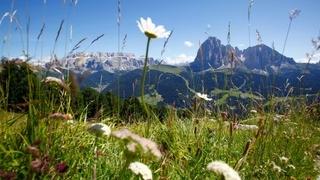 Sommer Wochenpauschele - Göden - Dolomiten